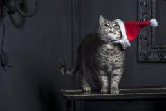 зима снежинки снежка киски иллюстрации рождества кота Стоковое Изображение