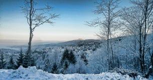 зима снежка ландшафта пущи стоковое изображение rf