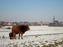 зима снежка ландшафта Голландии Стоковое Изображение RF