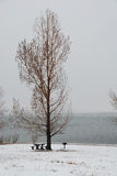 зима снежка озера Стоковые Изображения RF