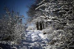 зима снежка пущи стоковые фото