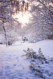 зима снежка пущи Стоковое фото RF