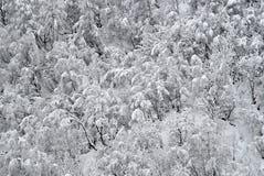 зима снежка пущи Стоковое Изображение RF