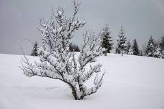 зима снежка Стоковое Фото