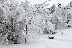 Зима Снежок в городе Сильный снегопад во время зимы в городе Эмоциональная девушка Стоковые Изображения RF