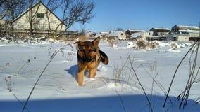 Зима снежок солнечно Собака Стоковые Изображения RF