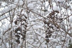 зима солнца природы пущи Ветви в снежке Деревья и ветви в снеге Стоковое фото RF