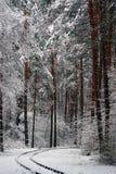 зима солнца природы пущи первый снег в лесе Стоковое Изображение