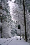 зима солнца природы пущи первый снег в лесе Стоковое фото RF