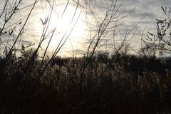 зима солнца природы пущи солнечная погода около реки Стоковое фото RF