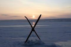 зима солнцеворота Стоковое Изображение RF