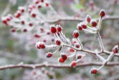 зима состава светлого тонового изображения способа красотки искусства совершенная Стоковые Фото