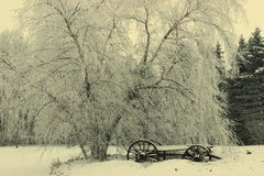 зима состава светлого тонового изображения способа красотки искусства совершенная Стоковая Фотография RF