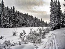 зима состава светлого тонового изображения способа красотки искусства совершенная Стоковые Изображения RF