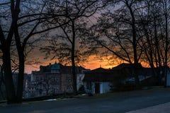 зима солнца природы пущи Город стоковые фотографии rf