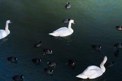 зима солнца природы пущи Озеро птиц стоковое фото