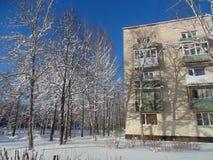 зима солнца природы пущи Стоковое Изображение RF