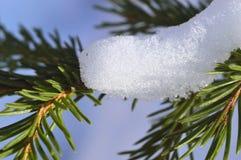 зима спруса неба сезона ветви предпосылки голубая В снежке Макрос Стоковое Изображение RF