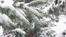 зима спруса неба сезона ветви предпосылки голубая видеоматериал