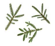 зима спруса неба сезона ветви предпосылки голубая Стоковое Изображение