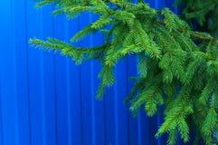 зима спруса неба сезона ветви предпосылки голубая стоковые изображения