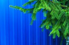 зима спруса неба сезона ветви предпосылки голубая стоковые изображения rf