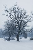 зима стенда Стоковая Фотография RF