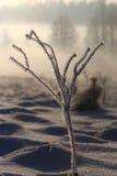 зима стержня травы дня импрессивная Стоковые Фото