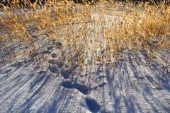 зима страны 4 цветов Стоковые Изображения RF
