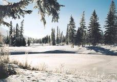 зима страны стоковая фотография