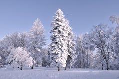 зима сумерк пущи Стоковое Изображение
