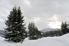 Зима сценарная в Хоккаидо Стоковые Изображения RF