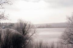 Зима с кустами Стоковое Фото