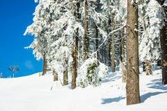 Зима с снегом в гигантских горах, чехией Стоковая Фотография