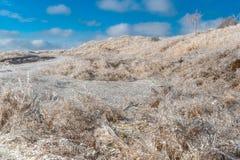 зима температуры России ландшафта 33c января ural покрытые Лед ветви кустов и травы после анормалного замерзающего дождя Стоковая Фотография RF