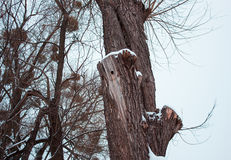 зима температуры России ландшафта 33c января ural полый woodpecker стоковые изображения