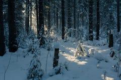 зима температуры России ландшафта 33c января ural Ясный морозный день, природа Стоковое фото RF