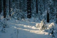 зима температуры России ландшафта 33c января ural Ясный морозный день, природа Стоковая Фотография