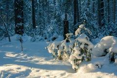 зима температуры России ландшафта 33c января ural Ясный морозный день, природа Сибиря Стоковое Изображение