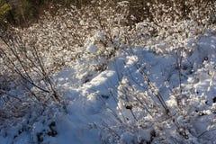 зима температуры России ландшафта 33c января ural Ясный морозный день, природа Сибиря Стоковые Изображения