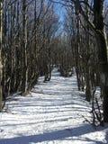 зима температуры России ландшафта 33c января ural Стоковые Фотографии RF
