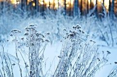 зима температуры России ландшафта 33c января ural alps покрыли древесины зимы малого снежка места дома швейцарские Стоковое фото RF