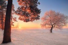 зима температуры России ландшафта 33c января ural Природа зимы в парке стоковое изображение