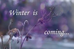 зима температуры России ландшафта 33c января ural Зима приходя концепция Цветок Frozenned, выборочный фокус стоковое изображение