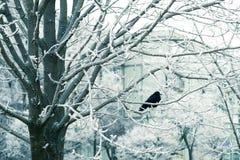 зима температуры России ландшафта 33c января ural птица на ветви, снежной зиме Стоковые Изображения RF