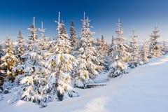 зима температуры России ландшафта 33c января ural стоковая фотография