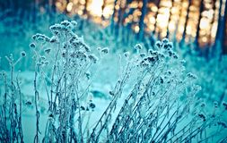 зима температуры России ландшафта 33c января ural alps покрыли древесины зимы малого снежка места дома швейцарские Стоковая Фотография