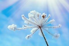 зима температуры России ландшафта 33c января ural alps покрыли древесины зимы малого снежка места дома швейцарские Стоковые Изображения