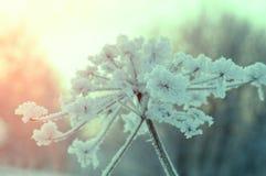 зима температуры России ландшафта 33c января ural alps покрыли древесины зимы малого снежка места дома швейцарские Стоковые Фотографии RF
