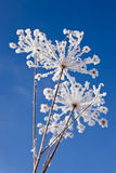 зима травы Стоковые Фото